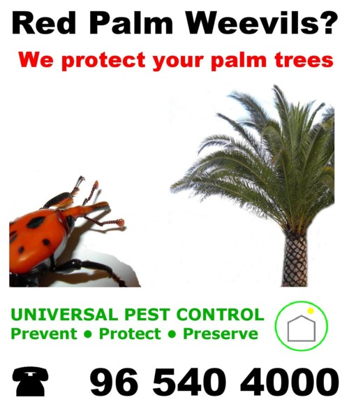 palm tree protection weevil algarve