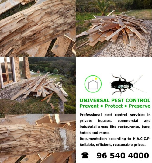 wood treatment against pests algarve