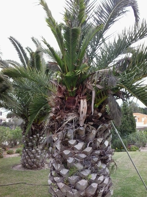 successfully saved palm trees algarve
