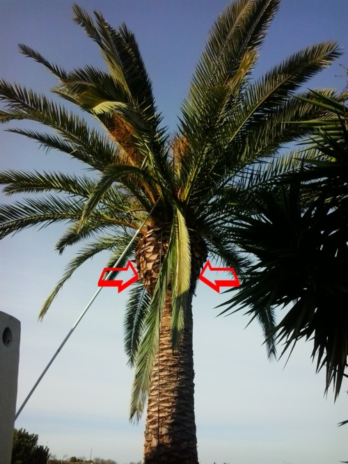 company treating palm trees in the algarve